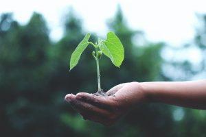 Crescita e formazione